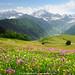 Caucasus wildflower meadow by .:: Maya ::.