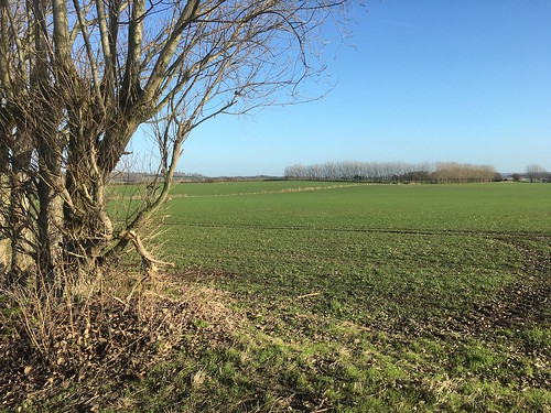 Large arable field