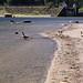 Allouette Lake park