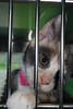Kittens_5