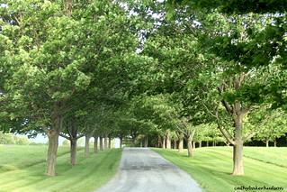 shelbuurne farms road