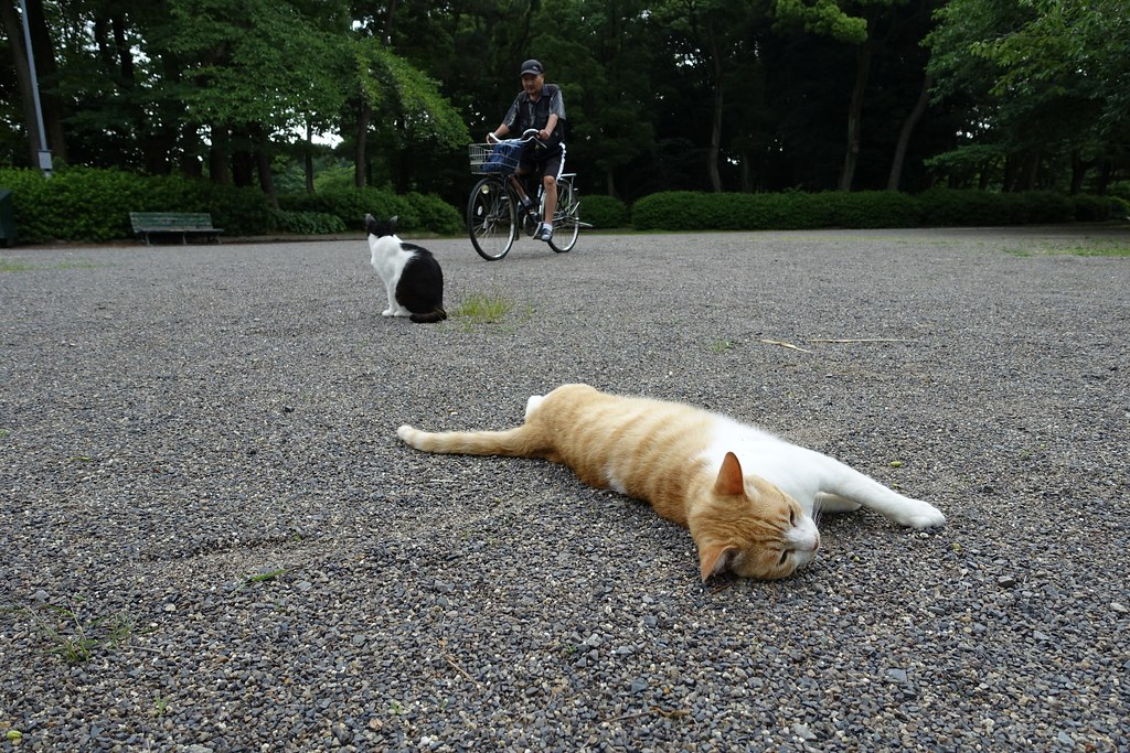 Two cats in Mejo park 2015/05 No.1.