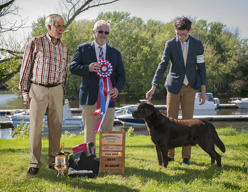 GCH Driftwood's Wilson CGN son of Ch. Doindogs Chelsea Marie CGN