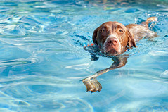 1713 Piper the swimming pup