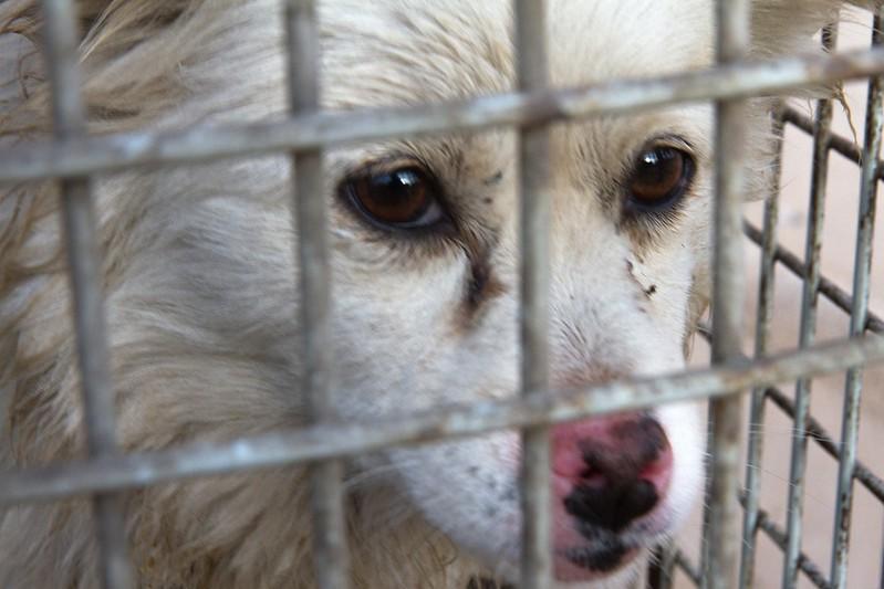 Comercio de pieles de perros en China