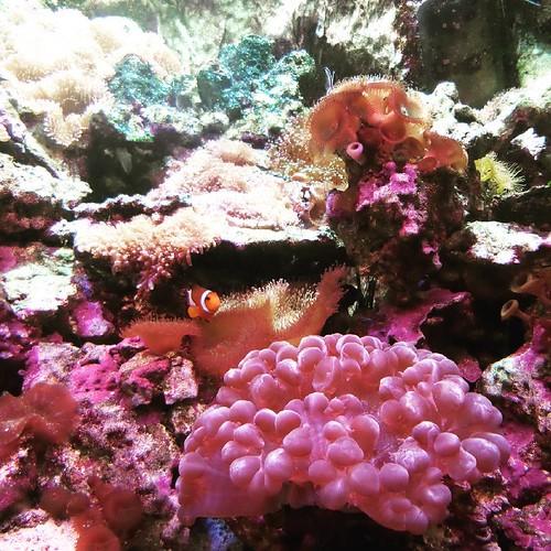 Nemo :)