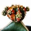 Another cactus #macrogardener #flowerandmacro #flowers #flowersofinstagram #cactus #mafia_naturelover #minimal