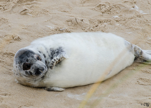 069 // 365 - Saw some seals on Horsey Beach today...