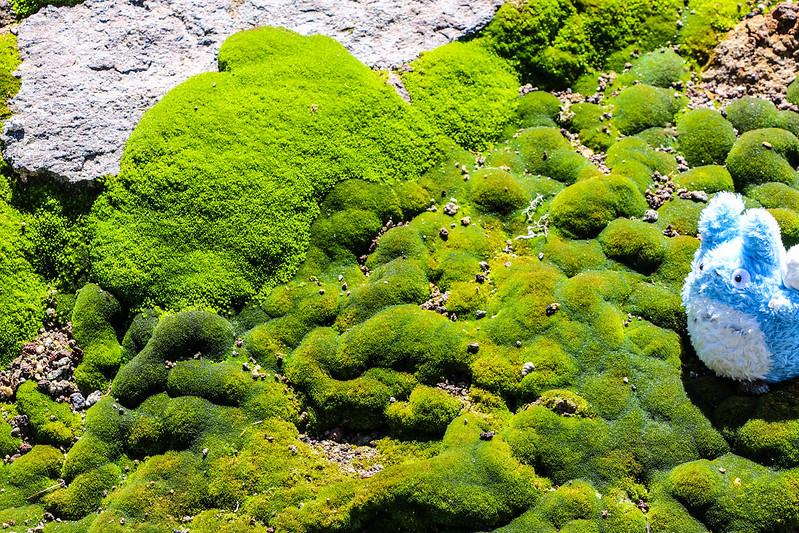 2014-07-20_01107_北海道登山旅行.jpg