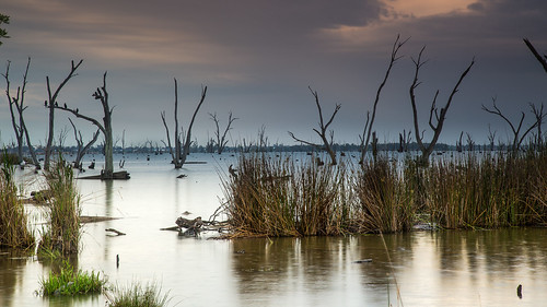 lake holiday water rain rural sunrise landscape dawn scenery 10 australia nsw newsouthwales scape waterscape lakemulwala greystump copyrightcolinpilliner