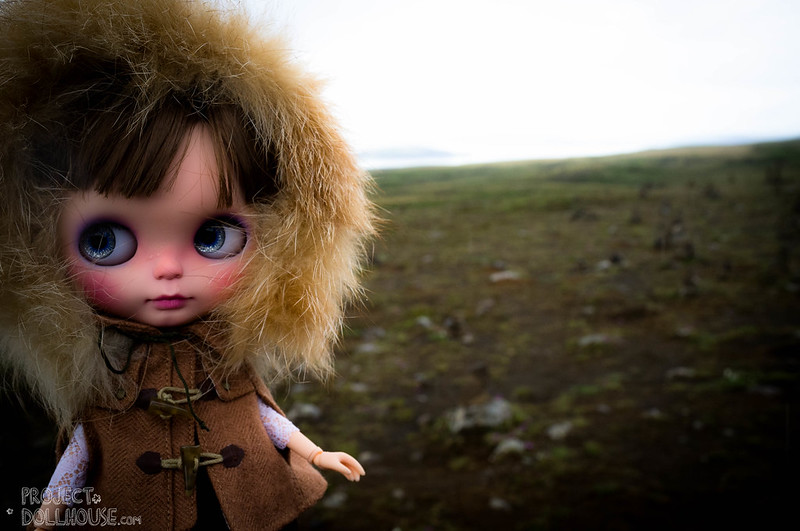 Nori in Iceland