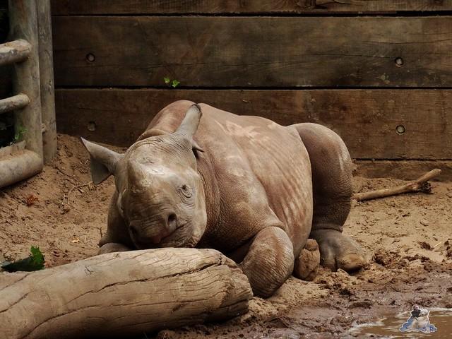 Zoo Berlin 07.08.2015  059