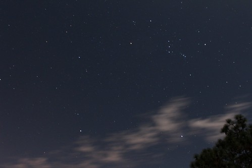 florida sebring highlands hammock state park nature night moon sky stars orion hunter constellation natural trees slash pine