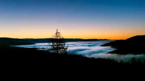 auberry california unitedstates us mountains sunrise sierranevada greathornedowl