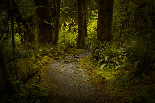 Hall of Mosses Trail at Hoh Rainforest