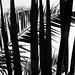 vegetativ palm (2) by HerbertWagner