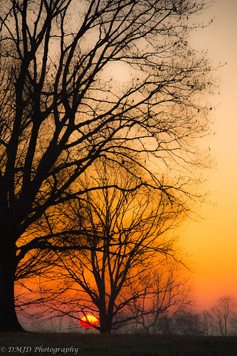 park morning trees sky tree sunrise dawn outdoor pennsylvania national valley serene forge goldenhour