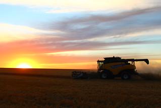Beautiful night for harvest.