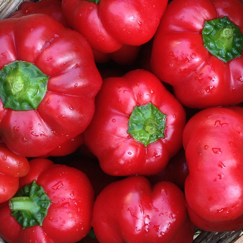 pimiento-peppers-web-475