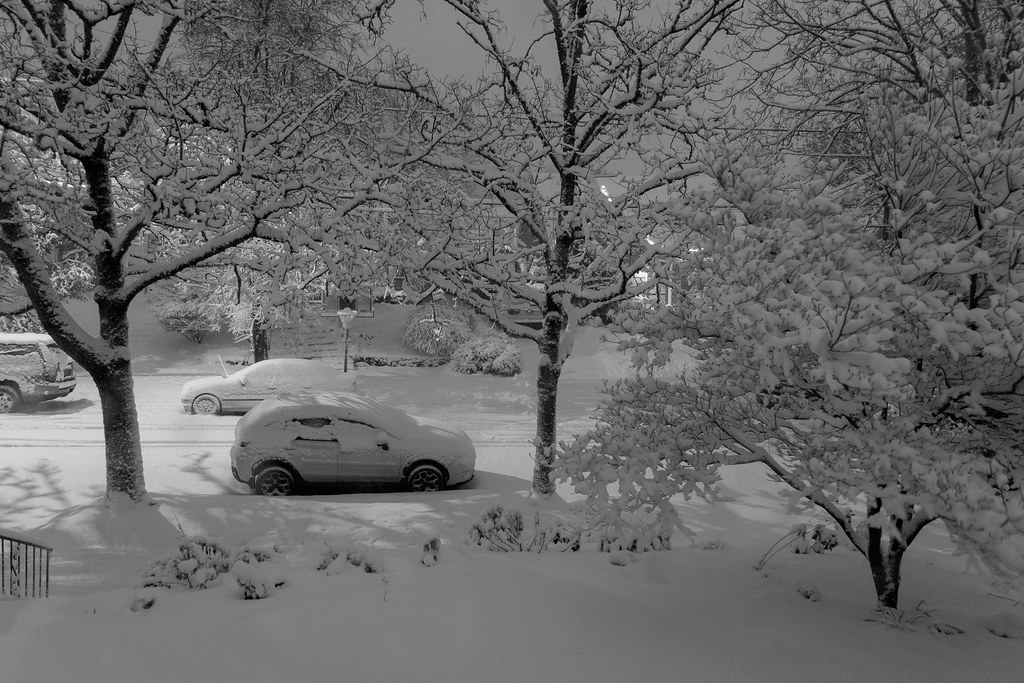 Snow covers trees and cars in Portland, Oregon