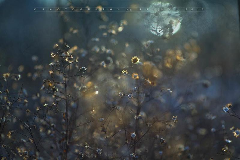 moonlight (title)