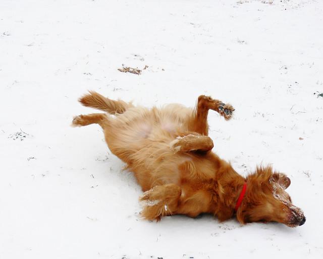 Oklahoma Service Dog Certification