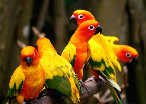 colorful birds - singapore