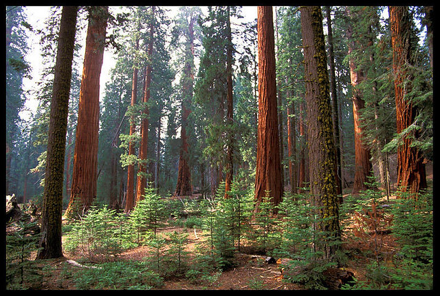 Top 10 Things to see or do in Sequoia and Kings Canyon National Park