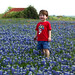 Morgan, bluebonnets, & barn