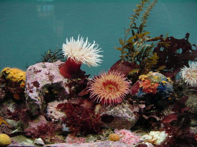 DSC00294, Monterey Bay Aquarium, California