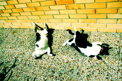 my cats in the sun