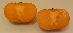 My First Fuyu Persimmon