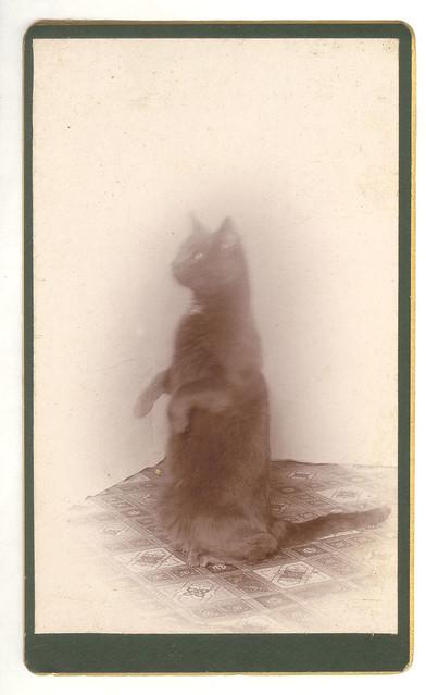 Cat in a Corner, Upstanding