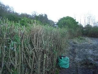 Hedges trimmed