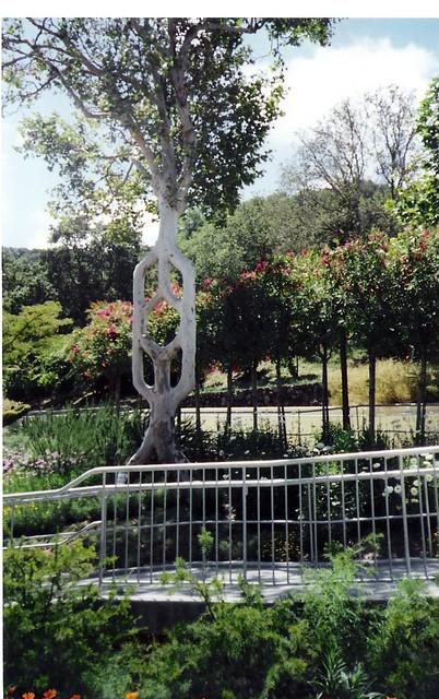 Circus trees bonfante gardens gilroy ca flickr for Gilroy garden trees