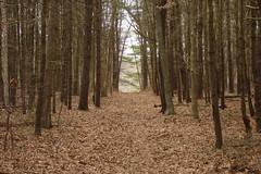 Dead Leaf Road (Warwick, RI)