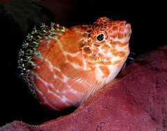 Underwater Timor-Leste
