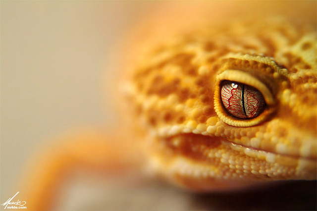 Lula - Mindblowing Macro Photography