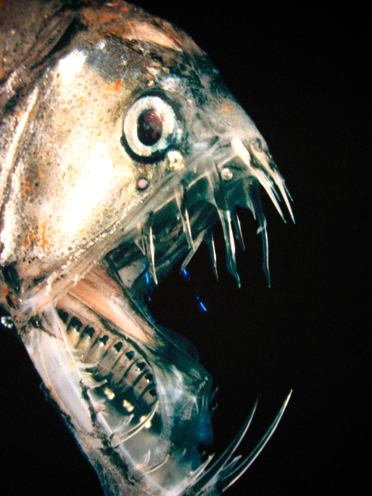 Scary looking deep sea fish for What is deep sea fishing