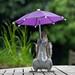 Umbrella 4 by maxjunkyard