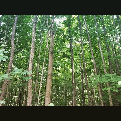 Back country of Sprague Brook Park #SpragueBrookPark #wny #instashot #nocrop
