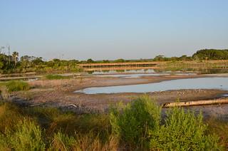Big Talbot Island - Spoonbill Pond July 9, 2015
