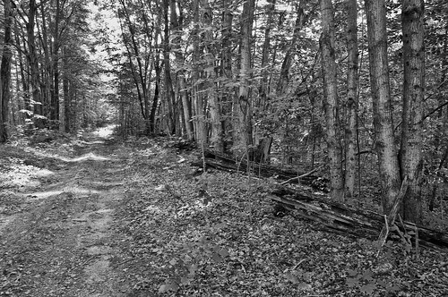fence blackwhite tracks rideaulakesdistrict