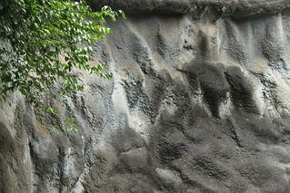 Zoo Wall Texture