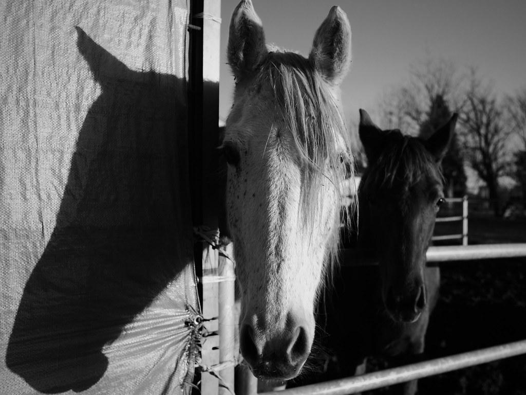 Good Wallpaper Horse Photography - 31933574201_b9398fb63f_b  Image_851829.jpg