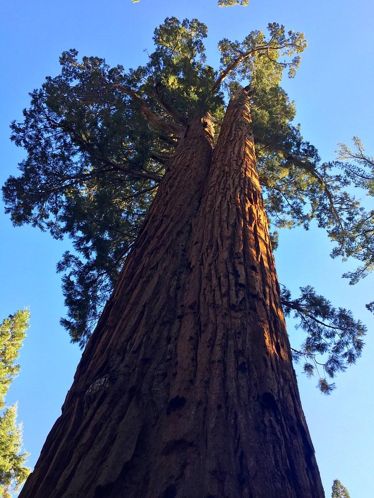 The Faithful Couple Tree