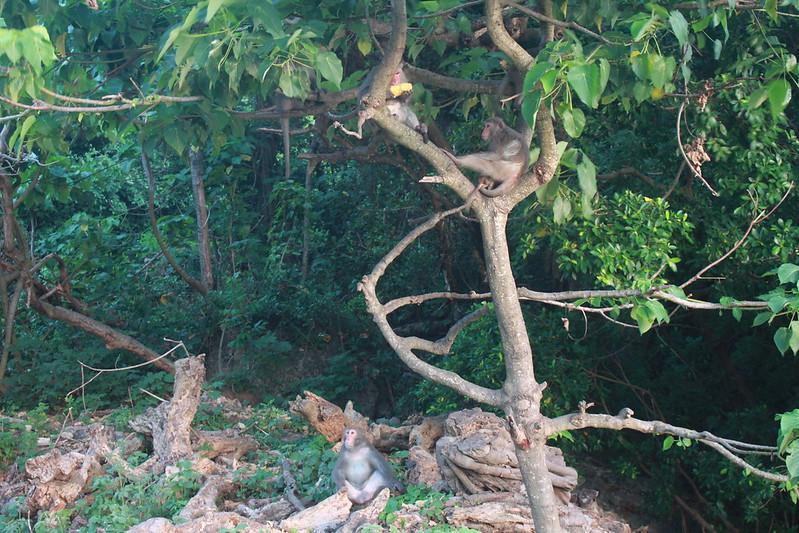 環島-西子灣-夕陽與猴子共舞 (24)