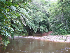 Villa Tunari, Amazon Bolivia