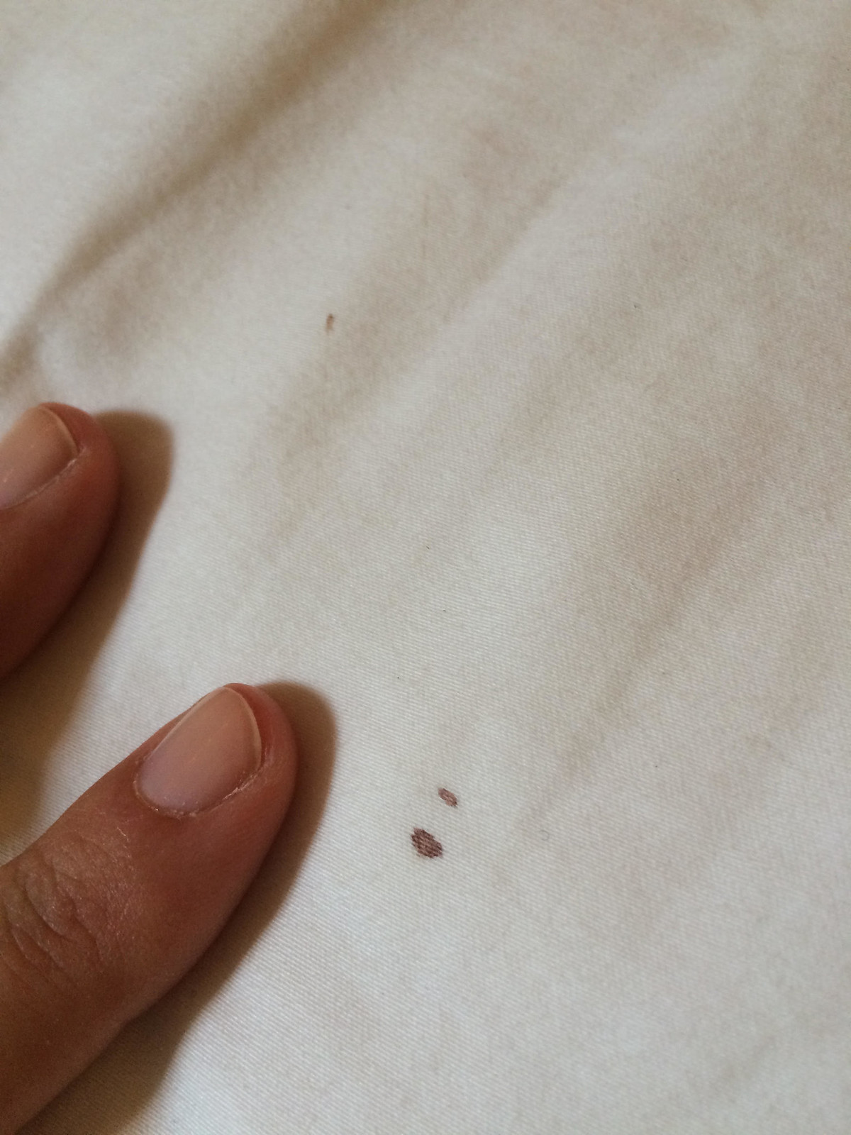 Bed bugs stains on sheets 25569 notefolio for Bed bugs on sheets