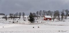 Druck Farm in snow